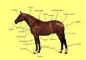 Obrázek pro kategorii koňské